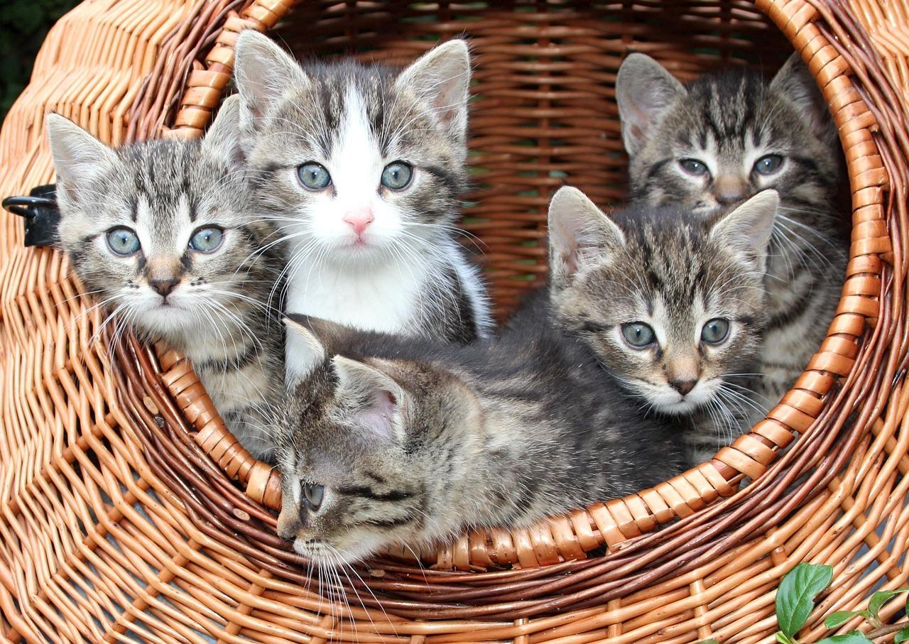 cat-1209743_1280